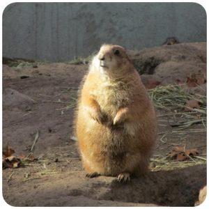 IMALU(イマル)が太ったってマジ?