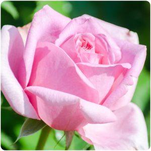 赤木野々花(NHK)がかわいい画像をどうぞ!